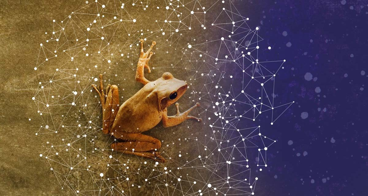 Nimittas: Spirit Animals – The Frog