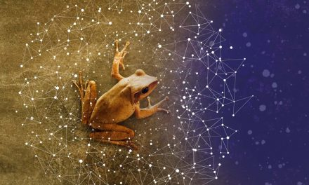 Nimittas: Spirit Animals – The Frog