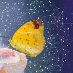Nimittas: Spirit Animals – The Butterfly